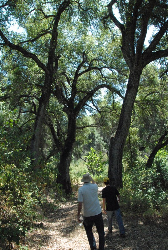 Forest Path photo image